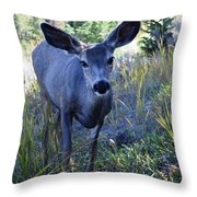 Curiousity Throw Pillow