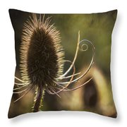 Curly And Spiky. Throw Pillow