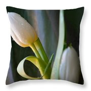 Curly And White Throw Pillow