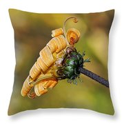 Curly Unfurling Daisy Throw Pillow