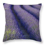 Curved Rows Throw Pillow