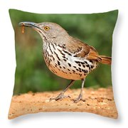 Curvedbill Thrasher With Grub Throw Pillow