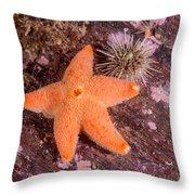 Cushion Winged Sea Star Throw Pillow