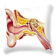 Cutaway Diagram Of Human Ear Throw Pillow