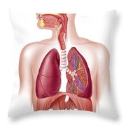 Cutaway Diagram Of Human Respiratory Throw Pillow by Leonello Calvetti