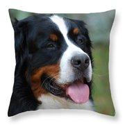 Cute Bernese Mountain Dog Throw Pillow