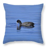Cute Coot Throw Pillow by Al Powell Photography USA