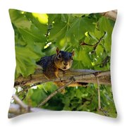 Cute Fuzzy Squirrel In Tree Throw Pillow