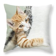 Cute Ginger Kitten In Igloo Throw Pillow