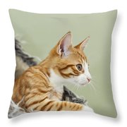 Cute Ginger Kitten On The Loookout Throw Pillow