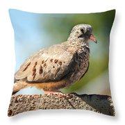Cute Inca Dove Throw Pillow by Robert Bales