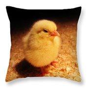 Cute Little Chick Throw Pillow