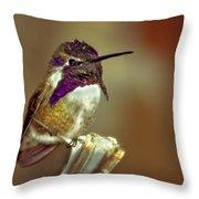 Cute Little Costa's Throw Pillow