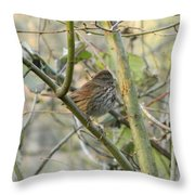 Cute Little Thrush Throw Pillow