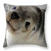 Cute Look 2 Throw Pillow