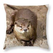 Cute Otter Portrait Throw Pillow