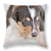 Cute Smooth Collie Puppy Throw Pillow