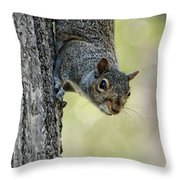 Cute Squirrel  Dare Me Throw Pillow
