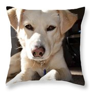 Cute White Dog Throw Pillow