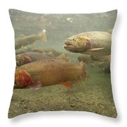 Cutthroat Trout In The Spring Idaho Throw Pillow by Michael Quinton