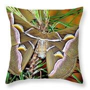 Cynthia Moth Throw Pillow