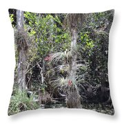 Cypress Airplant Display Throw Pillow