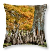 Cypress Knees In Fall Throw Pillow