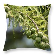 Cypress Nuts Throw Pillow