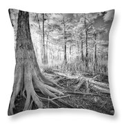 Cypress Roots In Big Cypress Throw Pillow