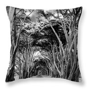 Cypress Tree Tunnel Point Reyes Throw Pillow