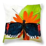 Cythera Butterfly Throw Pillow