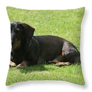 Dachshund Wants To Play  Throw Pillow