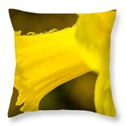 Daffodil Dewdrops Throw Pillow