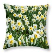 Daffodil Field 2 Throw Pillow