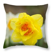 Daffodil Standout Throw Pillow