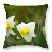 Trumpet Daffodils  Throw Pillow