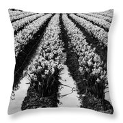 Daffodils Forever Throw Pillow