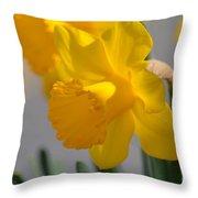 Daffodils In The Setting Sun Throw Pillow