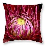 Dahlia-0006 Throw Pillow