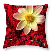 Dahlia And Kalanchoe Throw Pillow