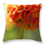 Dahlia Blossom Throw Pillow