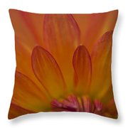 Dahlia Closeup Throw Pillow