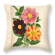 Dahlia Coccinea From A Begian Book Of Flora. Throw Pillow