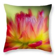 Dahlia Color Explosion Throw Pillow