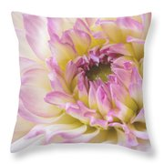 Dahlia Delight Square  Throw Pillow