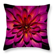 Dahlia Explosion Throw Pillow