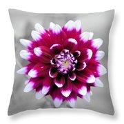 Dahlia Flower 2 Throw Pillow