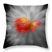 Dahlia Flower Beauty Throw Pillow