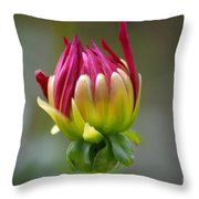 Dahlia Flower Bud Throw Pillow