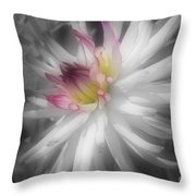 Dahlia Flower Splendor Throw Pillow